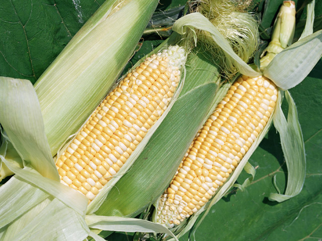 農業体験:夏